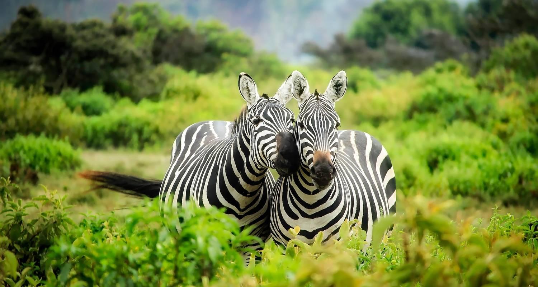 Kenia Safari August Marea Migratie