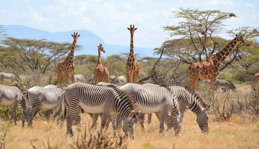 Circuit safari Kenya