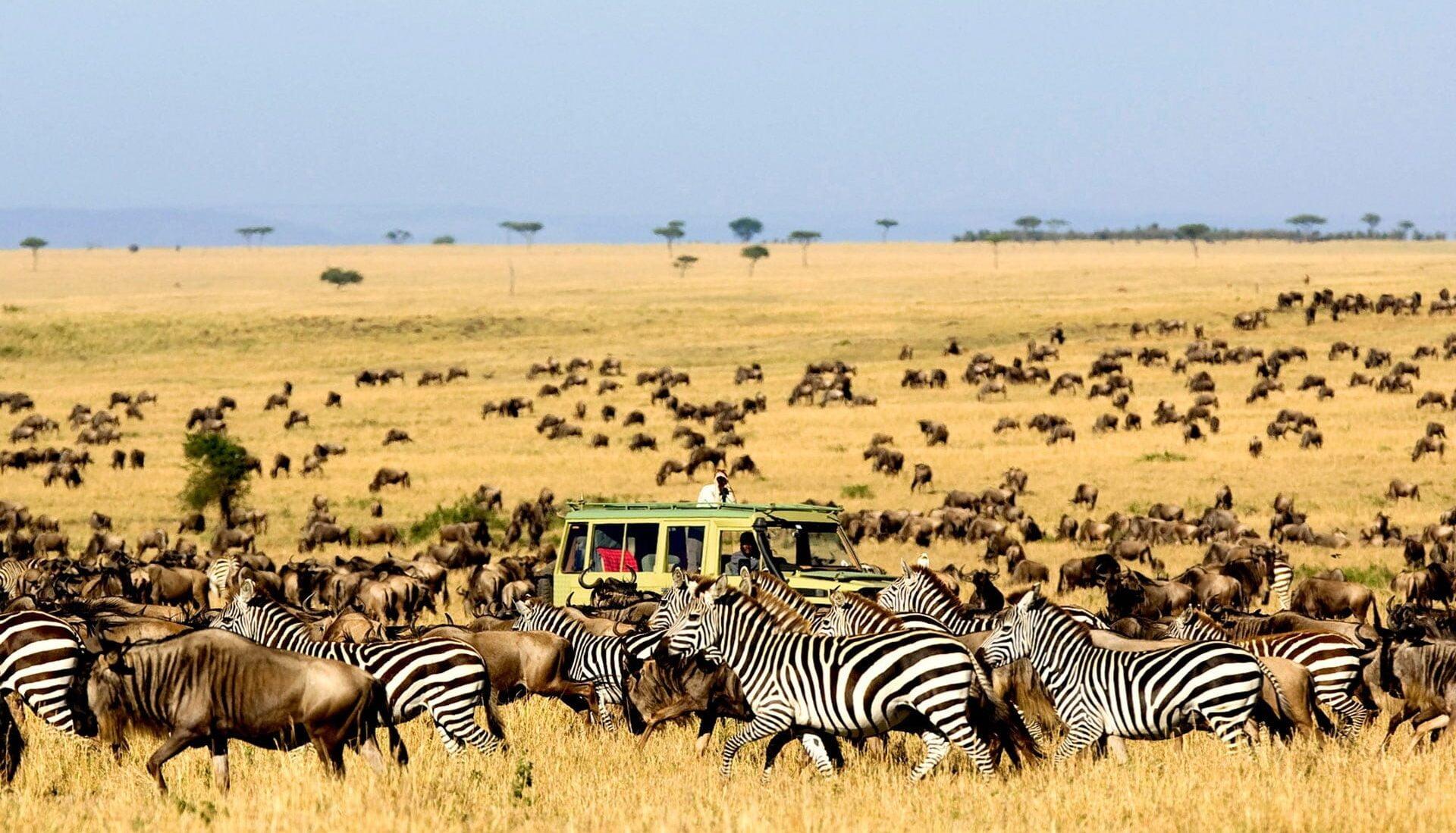 Safari in Kenya cu Holiday Tour Mures