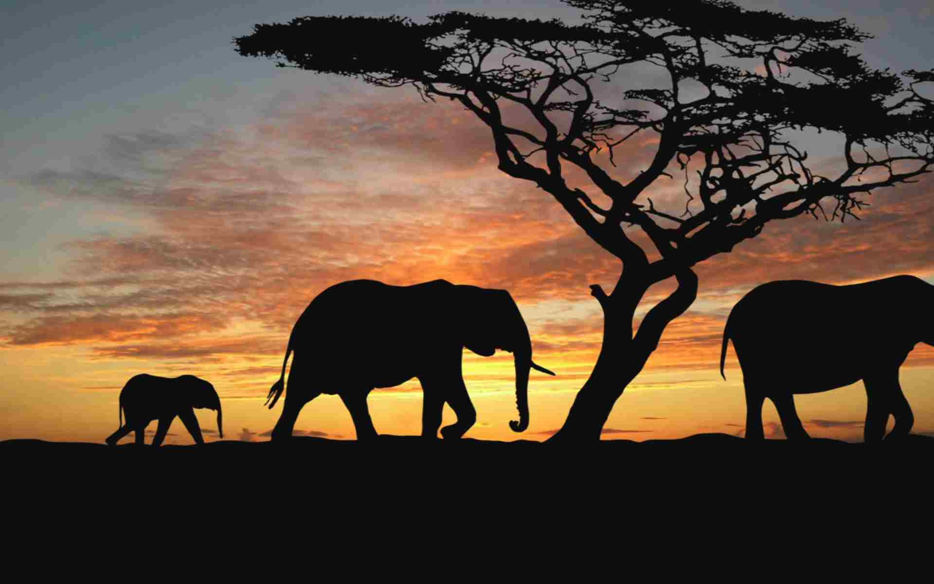 Kenia Safari Marea migratie Holiday Tour Mures