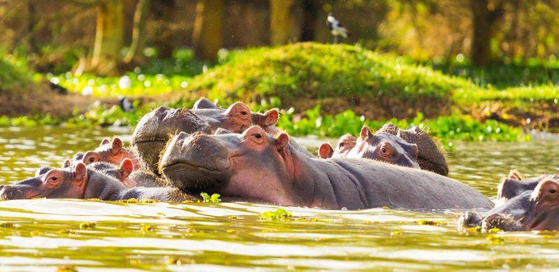 Kenya safari cu HolidayTour Mures
