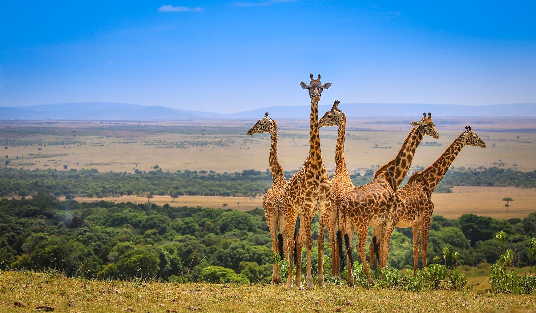 Kenya Safari Marea Migratie