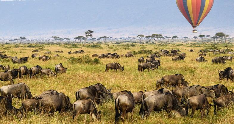 Kenia Safari Marea Migratie